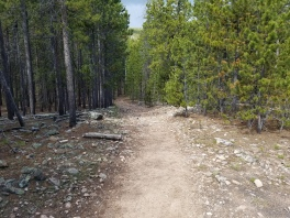Cub Creek trail in Arapaho National Forest
