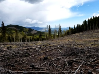 Burn area along the Cub Creek Trail in Arapaho National Forest leading to Mount Evans Wilderness area