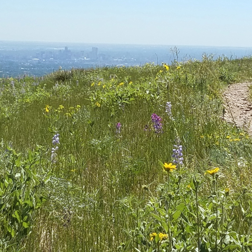 View of wildflowers from top of Green Mountain