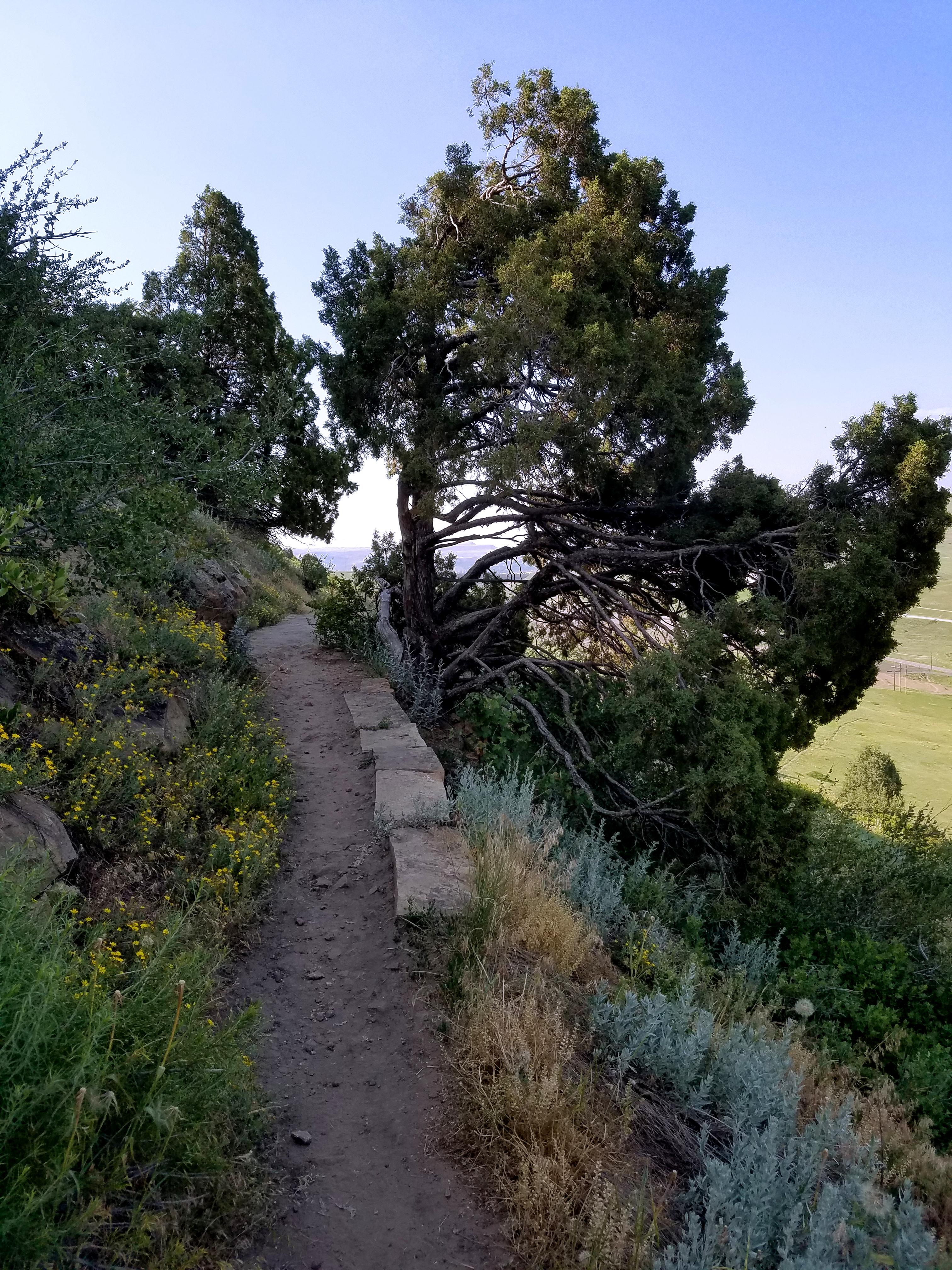 Zorro Trail in Matthew Winters Park