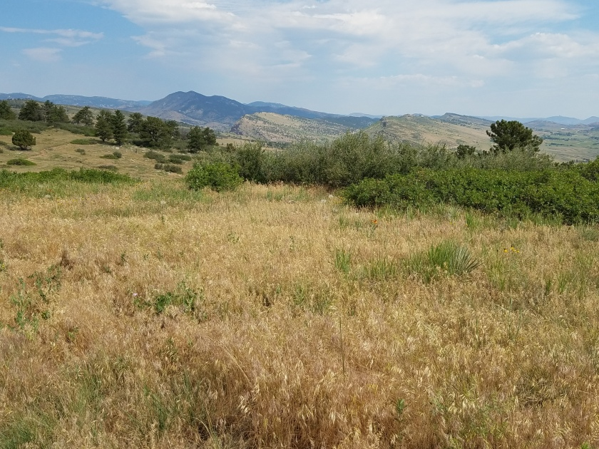 Grass mountain prairie at Rabbit Mountain open space park