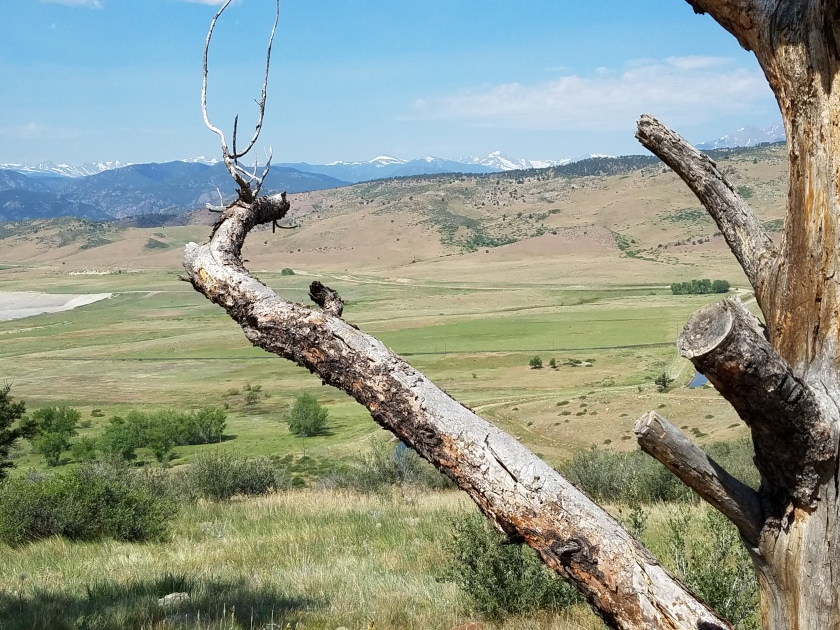 Dead Tree at Rabbit Mountain Open Space