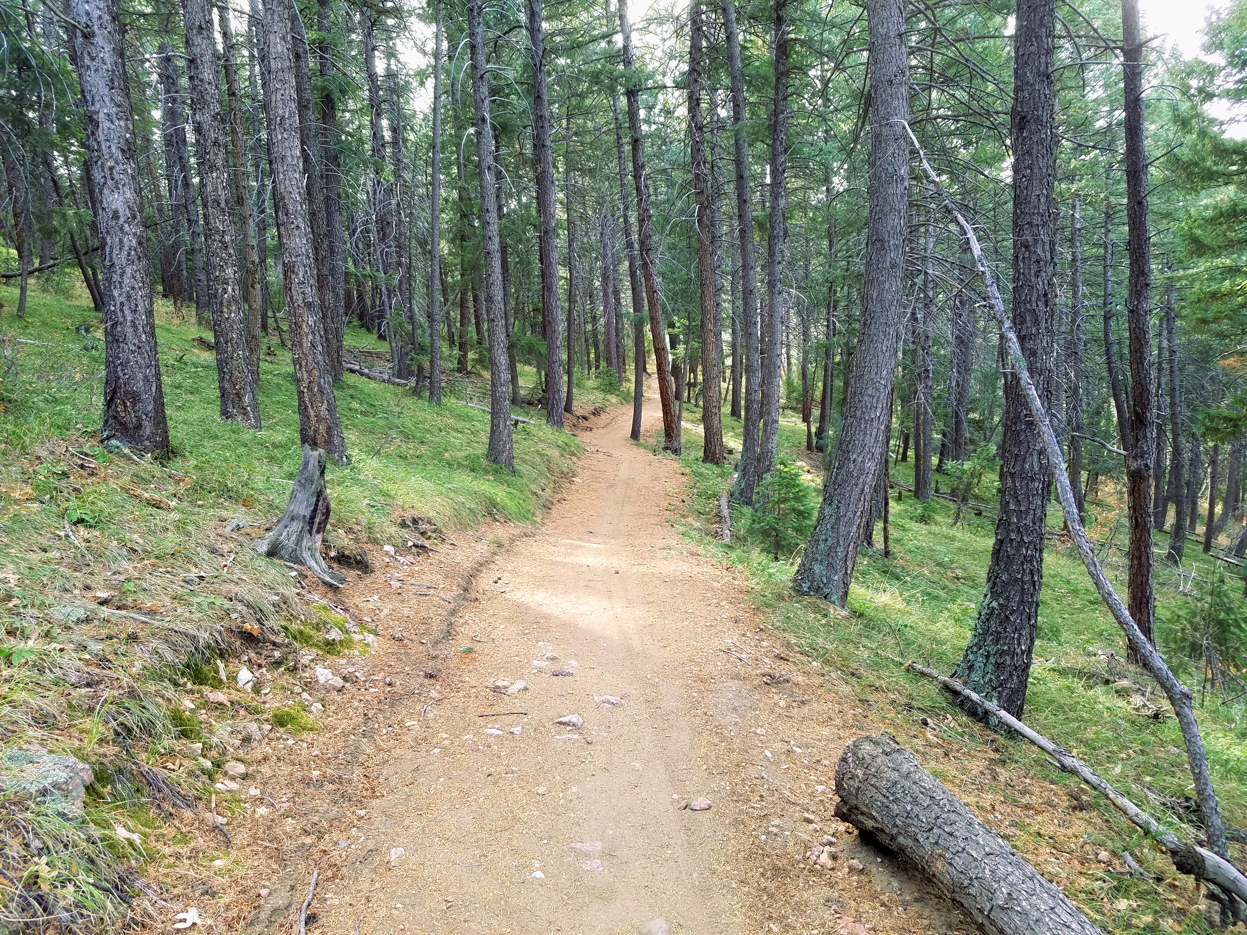 View of the forest on Homestead trail in Deer Creek Canyon Park