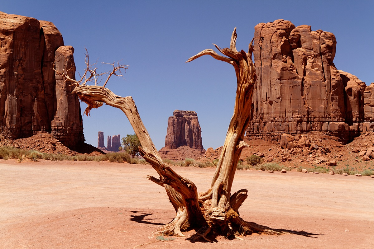 Cover for Free Arizona camping of dead wood and rock spires.