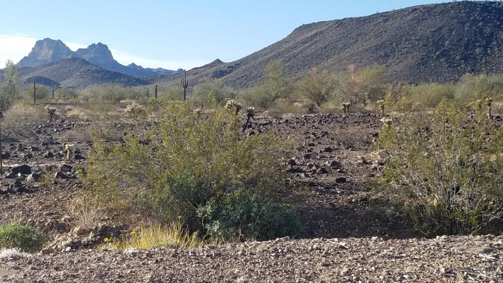 Desert landscape in Southern Arizona
