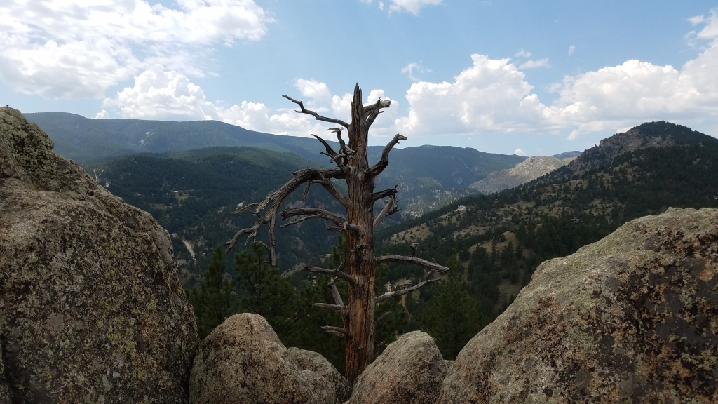 Dead Tree on top of Bummer Rock in Betasso Preserve