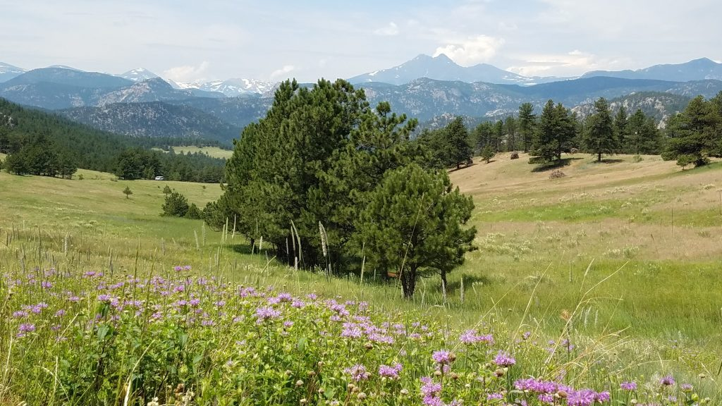 Wildflowers and Rocky Mountains