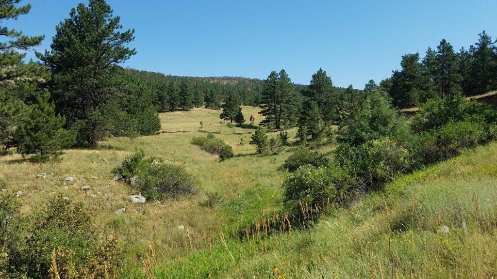 Grassy Meadow in Heil Ranch Park