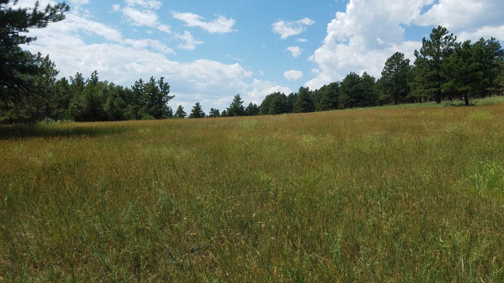Mountain Meadow in Heil Ranch