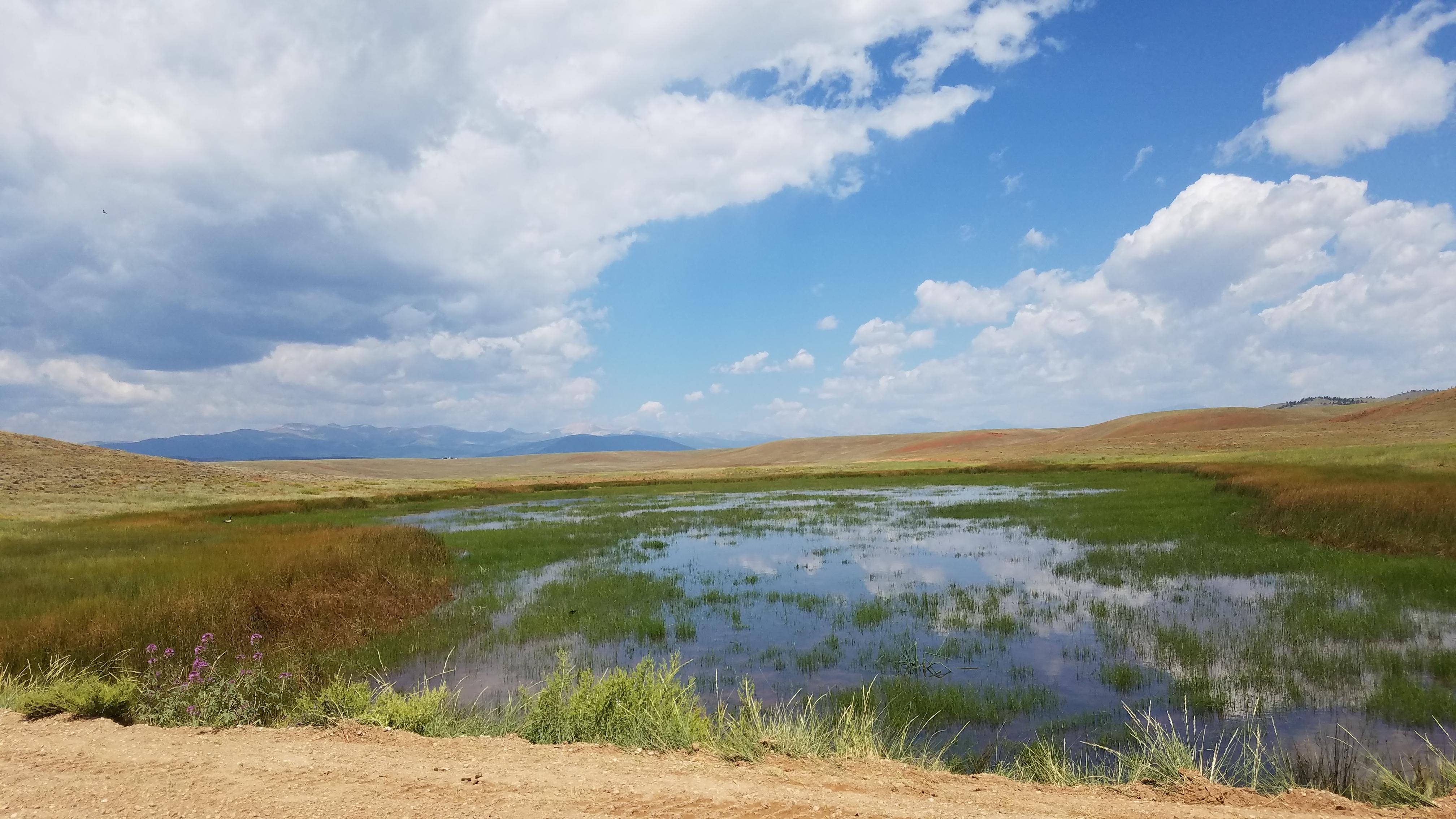 Wetlands area near Antero Reservoir